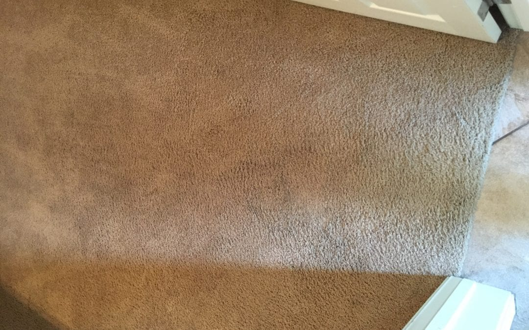 Phoenix, AZ: Carpet Cleaning Experts in the Valley