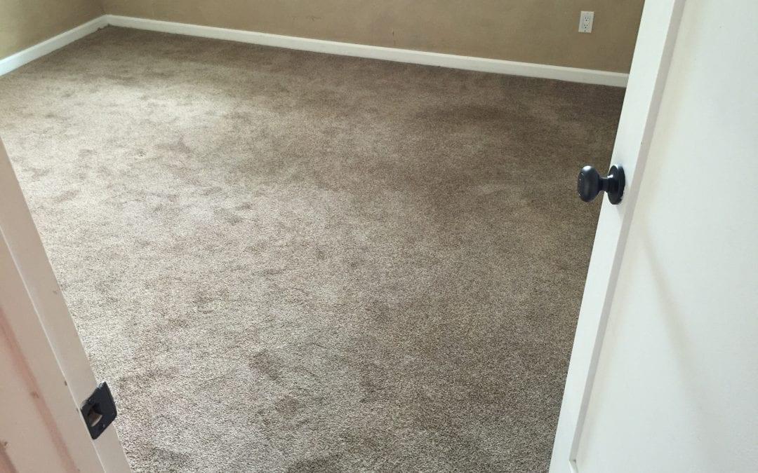 Carpet Cleaning in Scottsdale, AZ