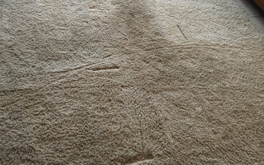 Phoenix, AZ: Carpet Cleaning